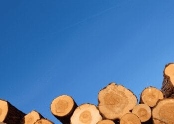 a picture of logs with a blue sky